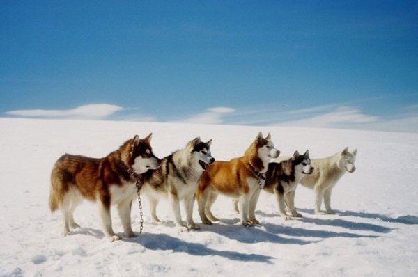 eightbelowdogs