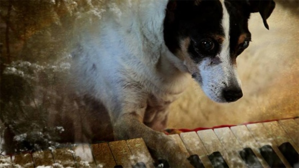 heart-of-a-dog-keyboard-620